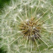 Los ejes de la meditación: 3 - Sólo respira